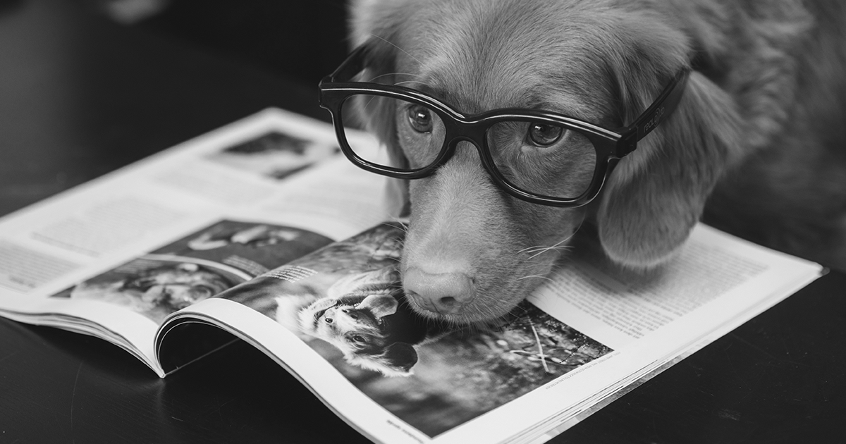 C3PR Round-Up: International Dog Day, National Burger Day, and (ONS) Living Longer Release